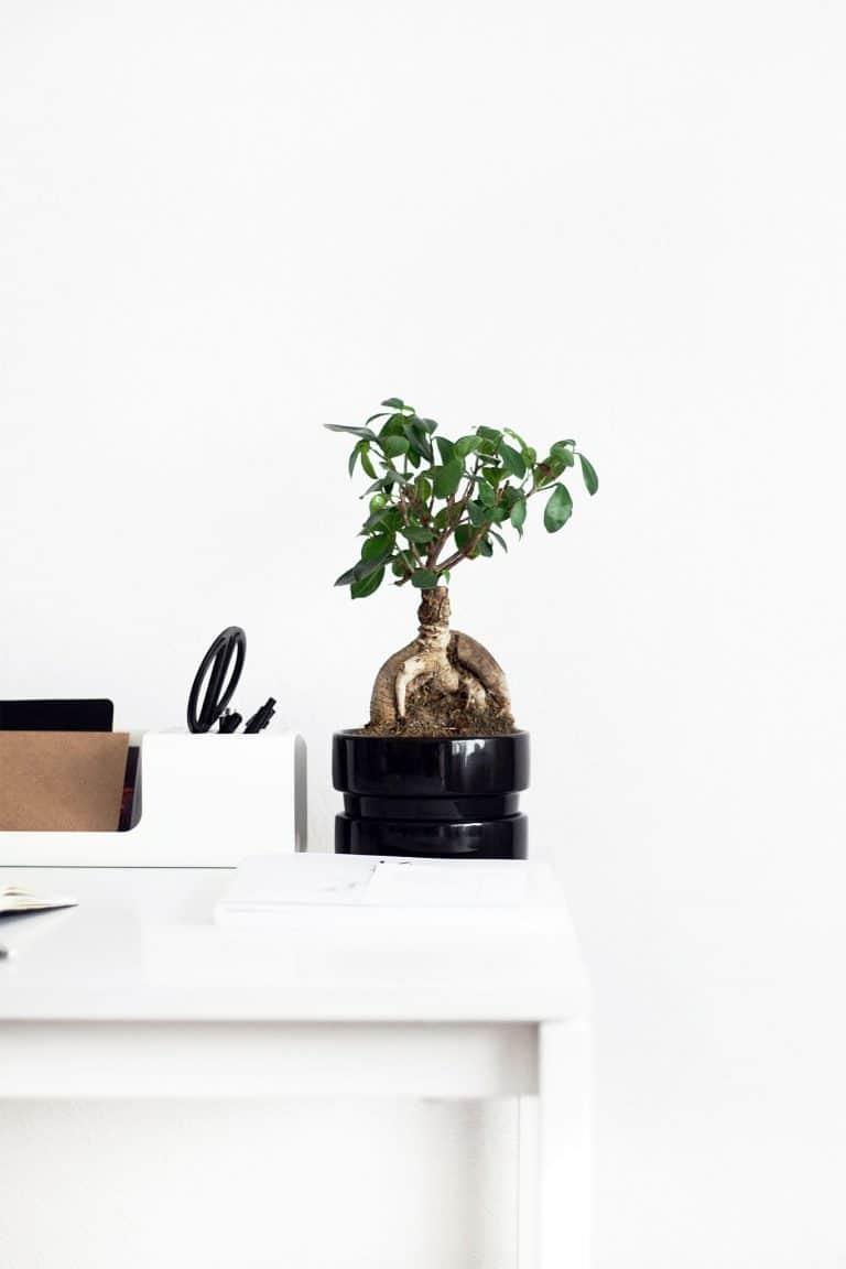 Bonsai Pflanze steht auf einem weißen Schreibtisch neben Büroutensilien
